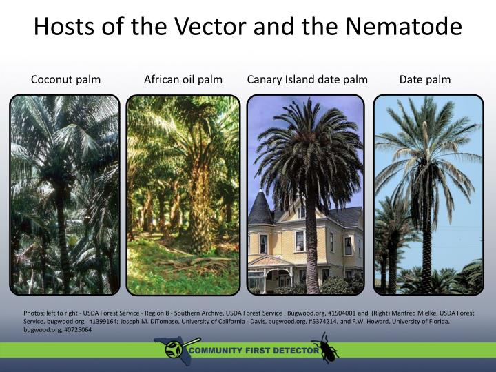 Hosts of the Vector and the Nematode