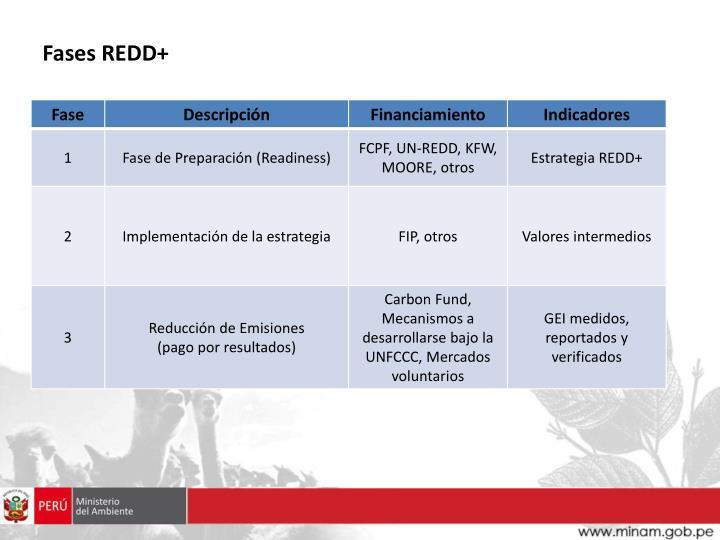 Fases REDD+