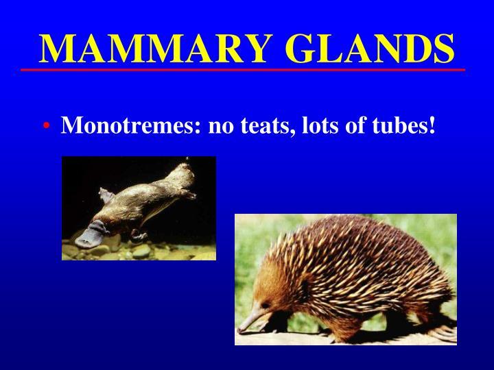 Mammary glands1