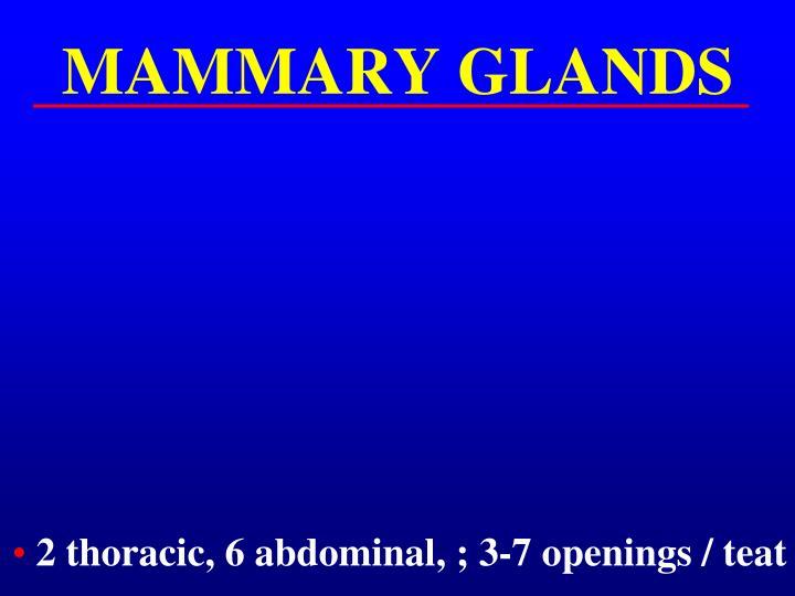MAMMARY GLANDS