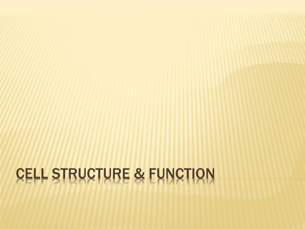 PPT - Cell structure & Function PowerPoint Presentation - ID:2097289