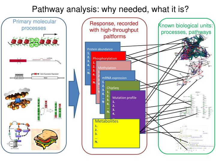 Pathway analysis: why needed, what it is?