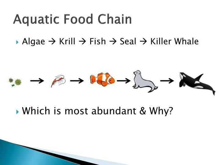 Aquatic Food Chain Pictures