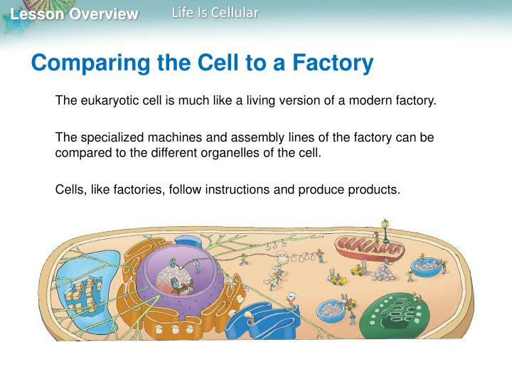 Comparing the Cell to a Factory
