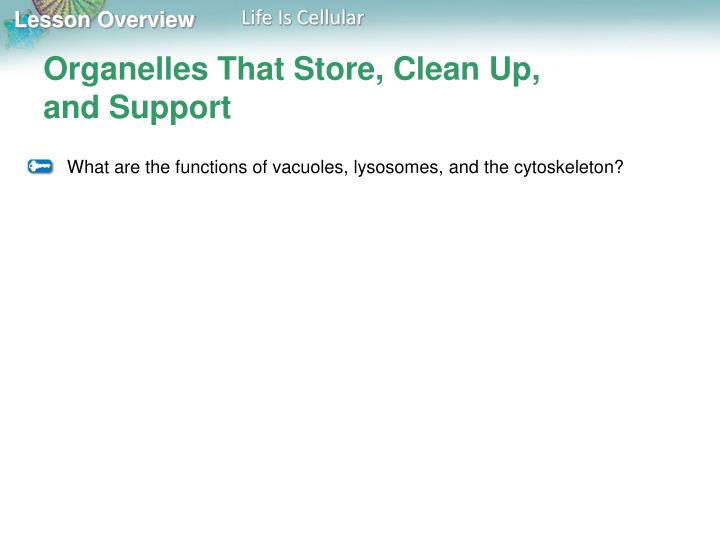 Organelles That Store, Clean Up,