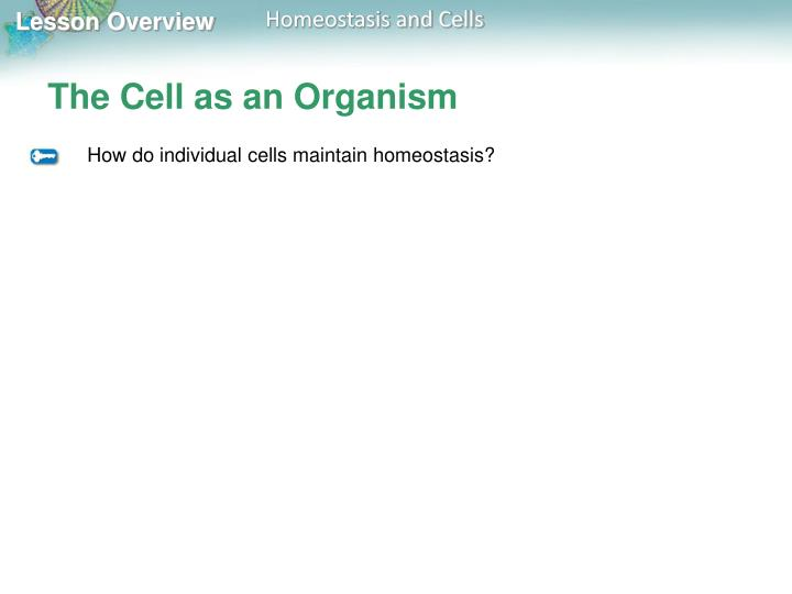The Cell as an Organism