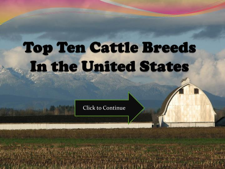 top ten cattle breeds in the united states n.