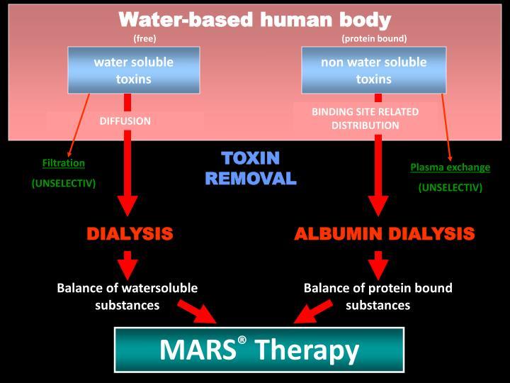 Water-based human body