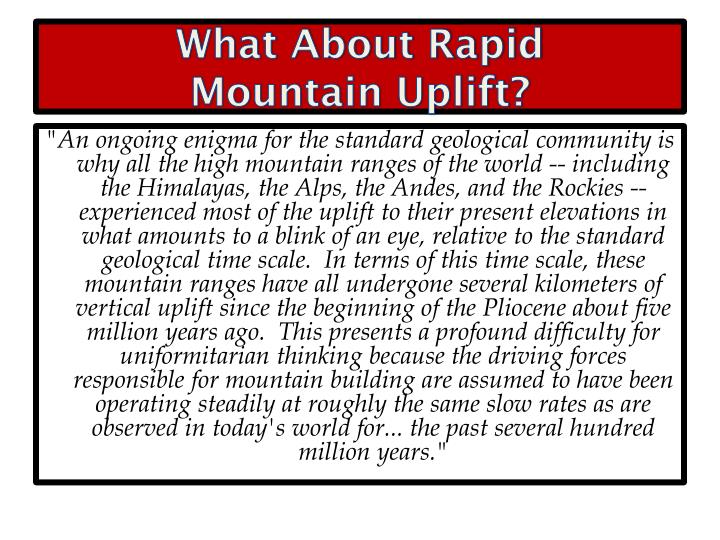 What About Rapid