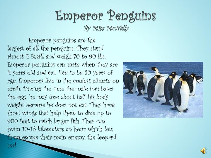 emperor penguins by miss mcnally n.