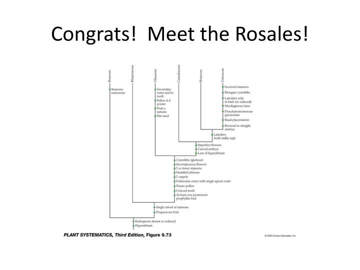 Congrats!  Meet the Rosales!