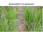 association riz poissons