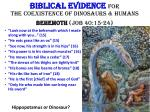 biblical evidence for the coexistence of dinosaurs humans behemoth job 40 15 24