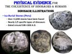 physical evidence for the coexistence of dinosaurs humans dinosaur illustrations3
