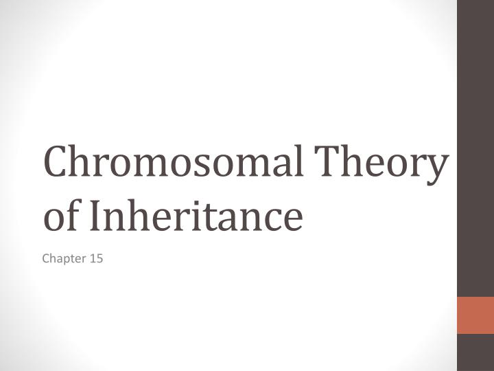chromosomal t heory of inheritance n.