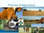 pictures of agriculture