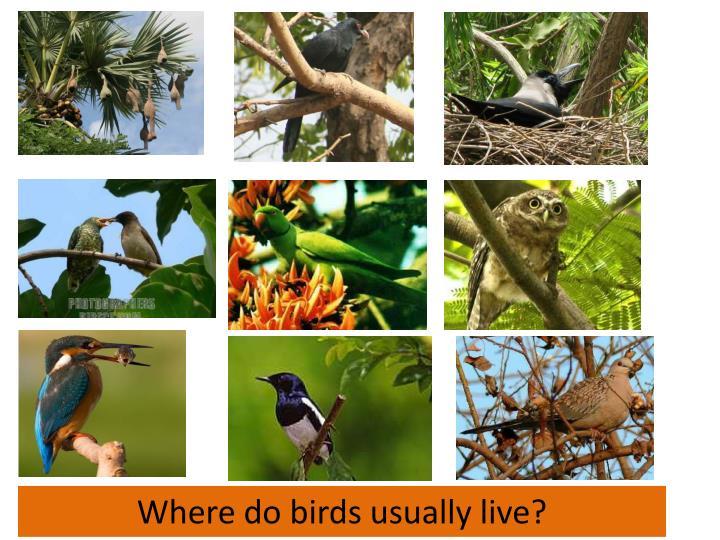 Where do birds usually live?