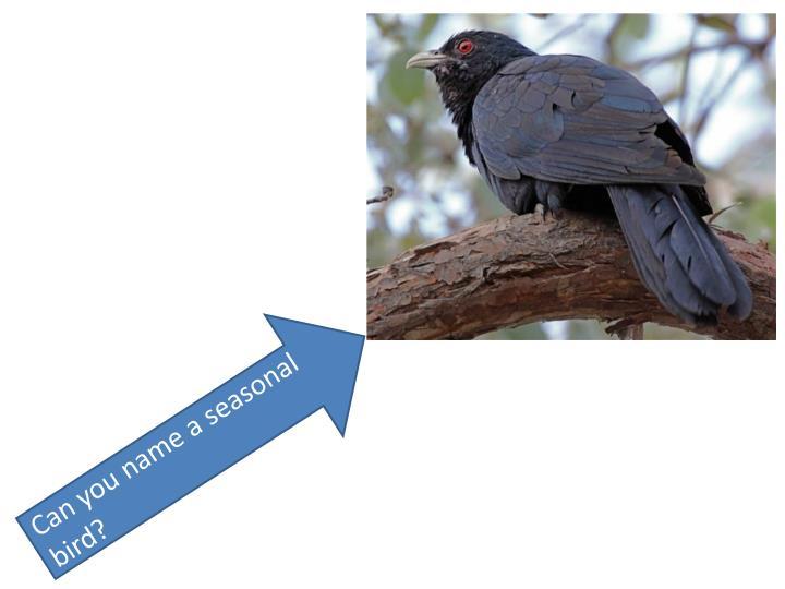 Can you name a seasonal bird?
