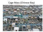 cage mass chinese bay