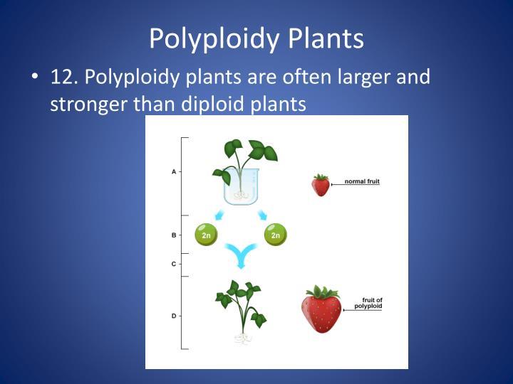 Polyploidy Plants