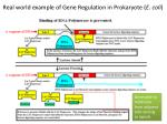 real world example of gene regulation in prokaryote e coli