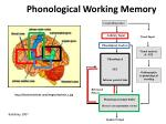 phonological working memory
