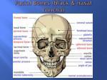 facial bones black nasal concha