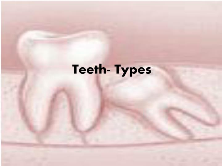 teeth types n.