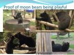 proof of moon bears being playful