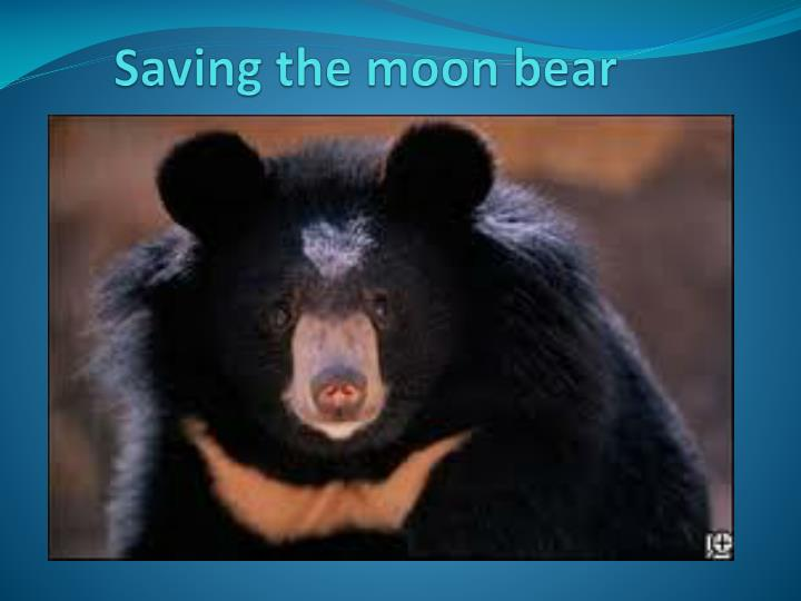 saving the moon bear n.
