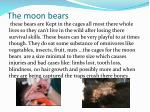 the moon bears