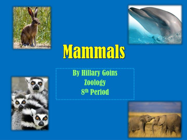 by hillary goins zoology 8 th period n.