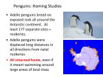 penguins homing studies