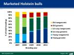 marketed holstein bulls