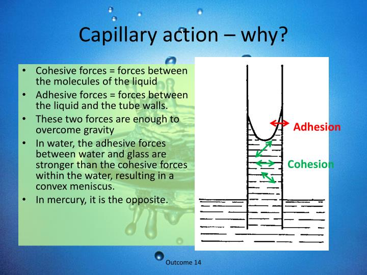 Capillary action – why?