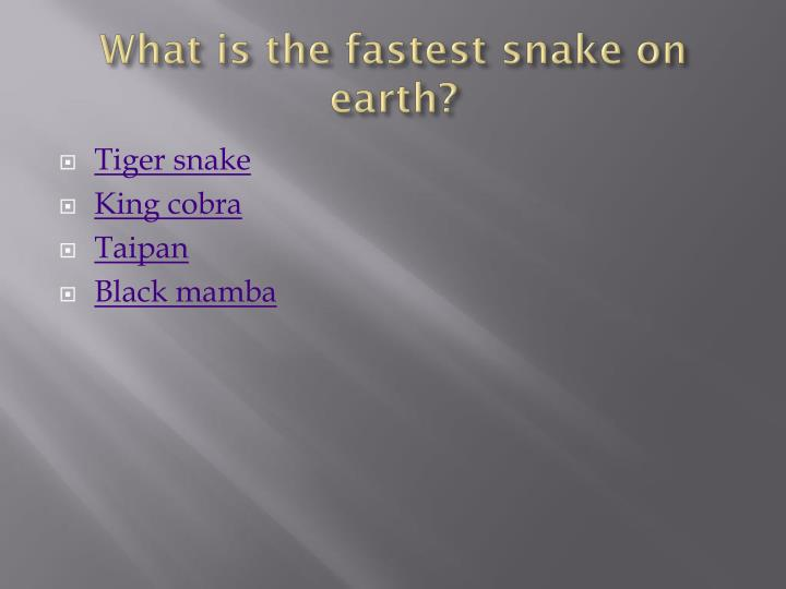 What is the fastest snake on earth?