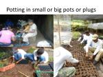 potting in small or big pots or plugs