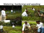 watering hardening and weeding