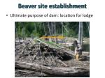 beaver site establishment1