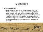 genetic drift5