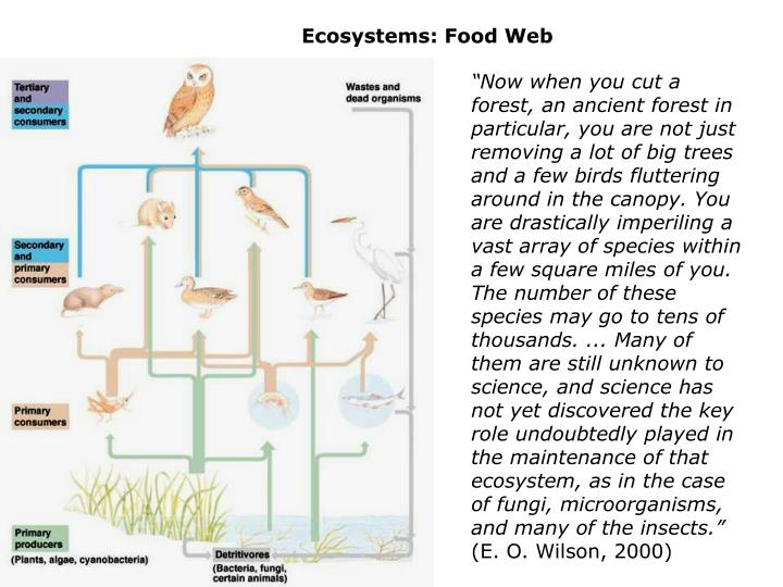 Ecosystems: Food Web