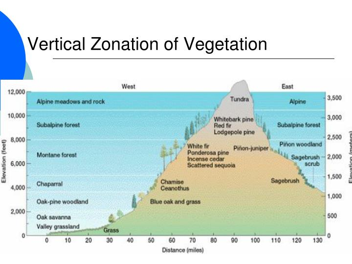 Vertical Zonation of Vegetation