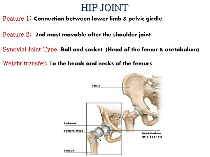 Ppt Joints Of The Lower Limb Powerpoint Presentation Id2103546