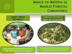 avance en materia de manejo forestal comunitario