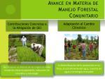 avance en materia de manejo forestal comunitario2