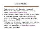 animal models1
