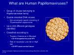 what are human papillomaviruses