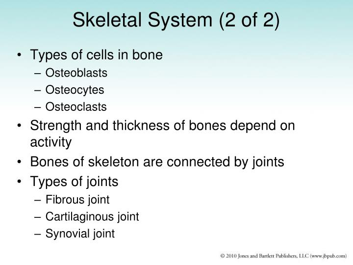 Skeletal System (2 of 2)