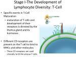 stage i the development of lymphocyte diversity t cell