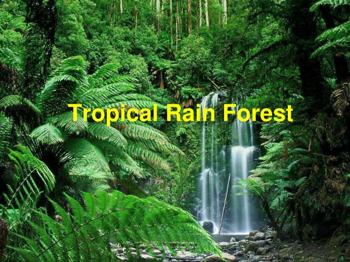 tropical rain forest n.